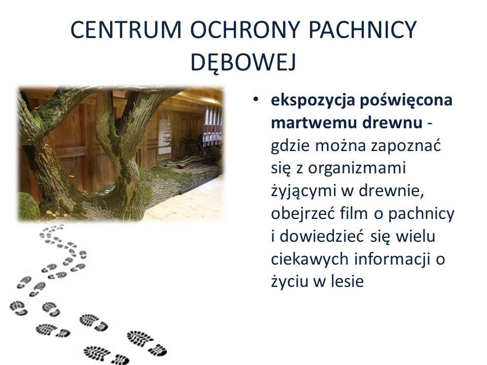 CENTRUM OCHRONY PACHNICY DĘBOWEJ ekspozycja poświęcona martwemu drewnu - gdzie można zapoznać się z organizmami żyjącymi w drewnie, obejrzeć film o pa