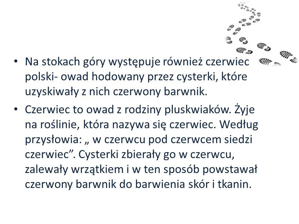 Na stokach góry występuje również czerwiec polski- owad hodowany przez cysterki, które uzyskiwały z nich czerwony barwnik. Czerwiec to owad z rodziny