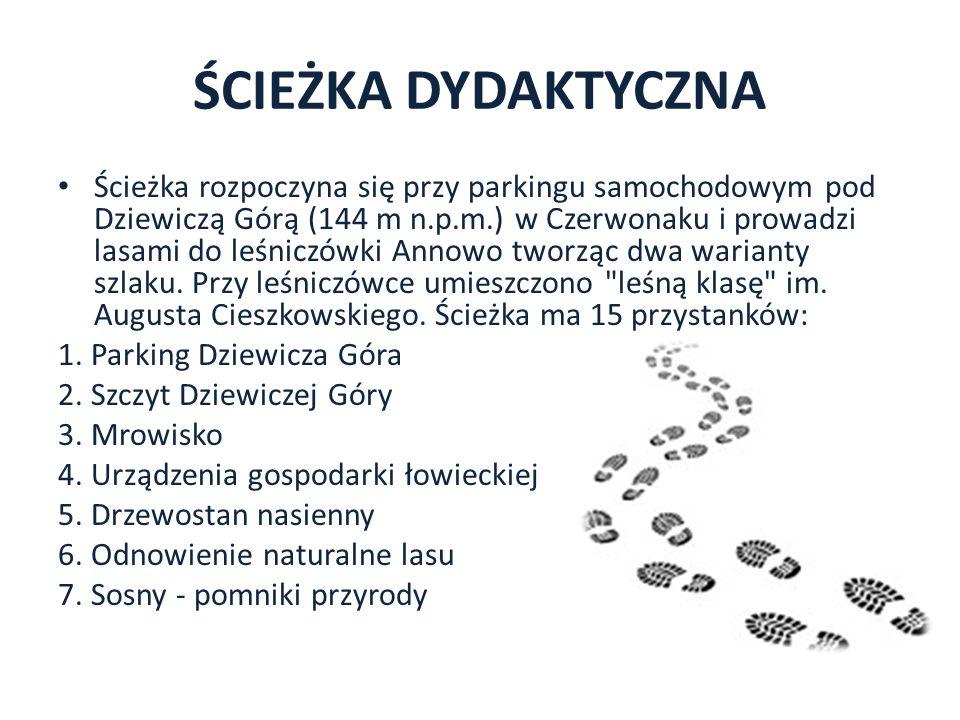 ŚCIEŻKA DYDAKTYCZNA Ścieżka rozpoczyna się przy parkingu samochodowym pod Dziewiczą Górą (144 m n.p.m.) w Czerwonaku i prowadzi lasami do leśniczówki