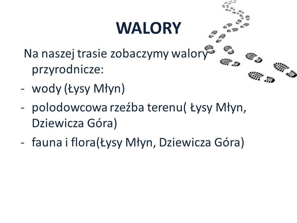 WALORY Na naszej trasie zobaczymy walory przyrodnicze: -wody (Łysy Młyn) -polodowcowa rzeźba terenu( Łysy Młyn, Dziewicza Góra) -fauna i flora(Łysy Mł