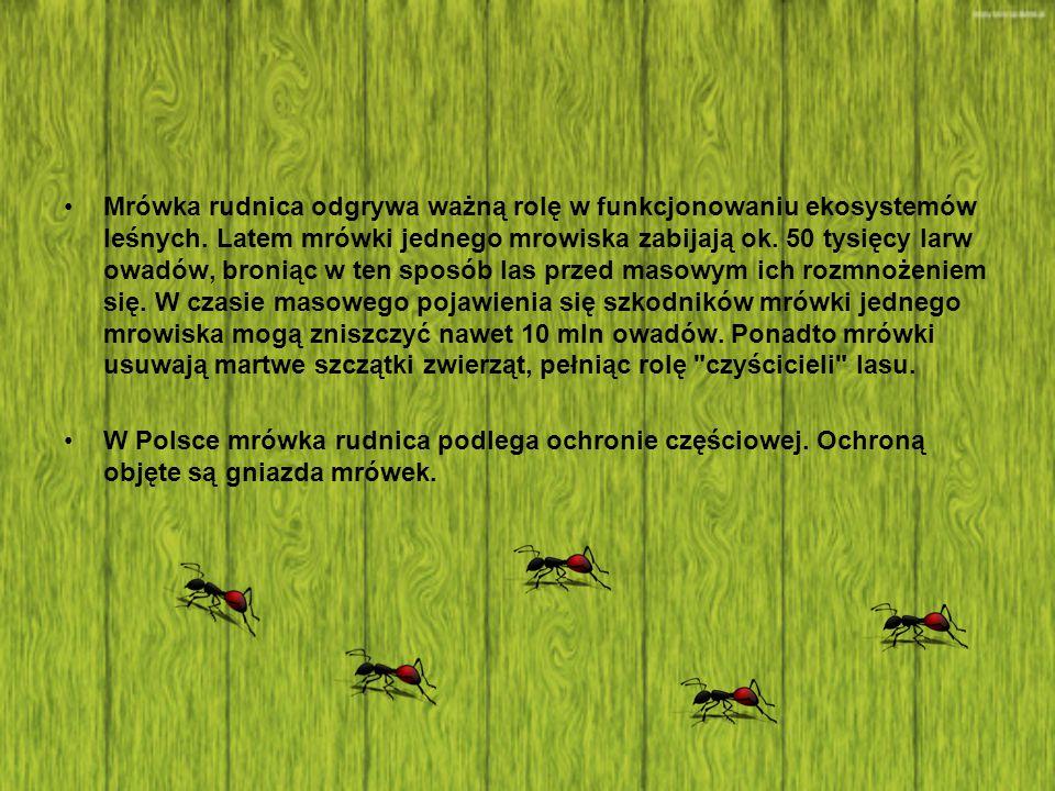 Mrówka rudnica odgrywa ważną rolę w funkcjonowaniu ekosystemów leśnych. Latem mrówki jednego mrowiska zabijają ok. 50 tysięcy larw owadów, broniąc w t