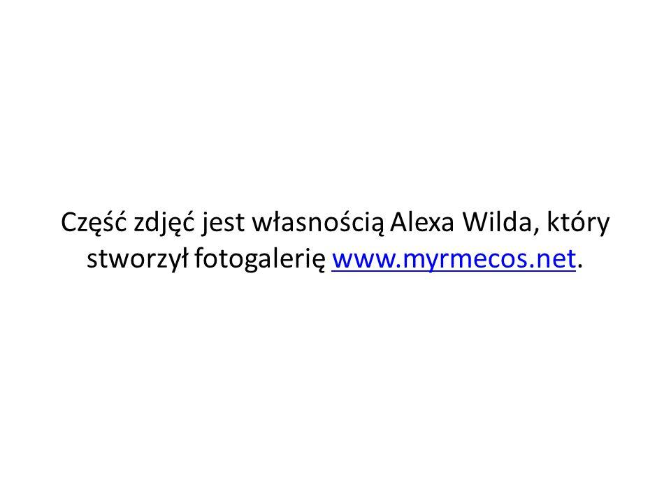 Część zdjęć jest własnością Alexa Wilda, który stworzył fotogalerię www.myrmecos.net.www.myrmecos.net