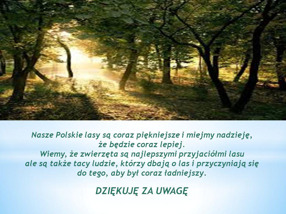 Nasze Polskie lasy są coraz piękniejsze i miejmy nadzieję, że będzie coraz lepiej. Wiemy, że zwierzęta są najlepszymi przyjaciółmi lasu ale są także t