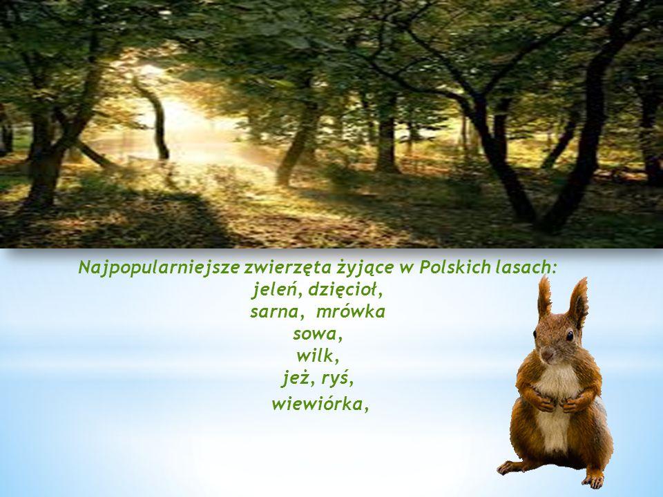 Najpopularniejsze zwierzęta żyjące w Polskich lasach: jeleń, dzięcioł, sarna, mrówka sowa, wilk, jeż, ryś, wiewiórka,