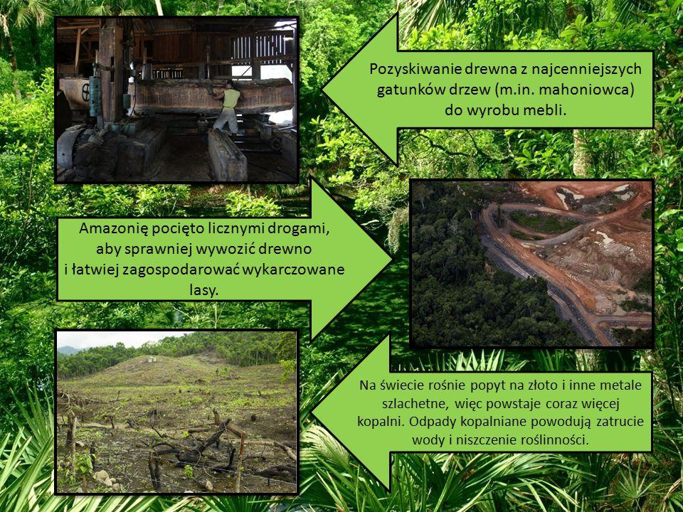 Pozyskiwanie drewna z najcenniejszych gatunków drzew (m.in. mahoniowca) do wyrobu mebli. Amazonię pocięto licznymi drogami, aby sprawniej wywozić drew