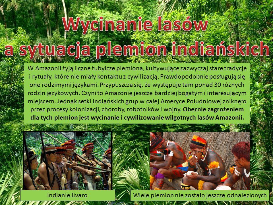 W Amazonii żyją liczne tubylcze plemiona, kultywujące zazwyczaj stare tradycje i rytuały, które nie miały kontaktu z cywilizacją.