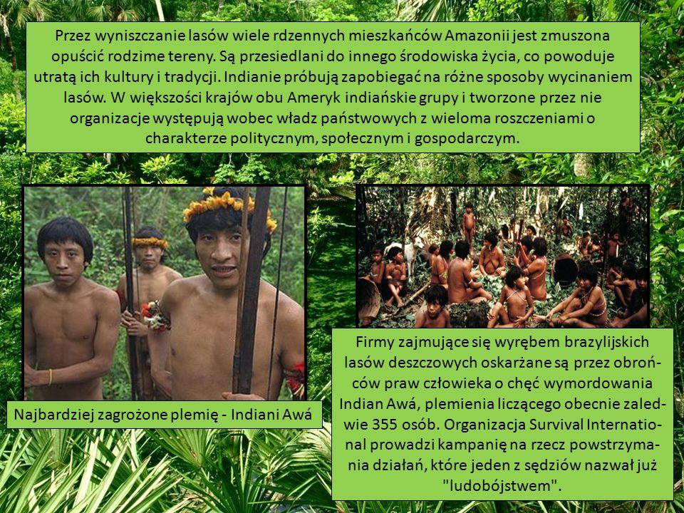 Przez wyniszczanie lasów wiele rdzennych mieszkańców Amazonii jest zmuszona opuścić rodzime tereny. Są przesiedlani do innego środowiska życia, co pow