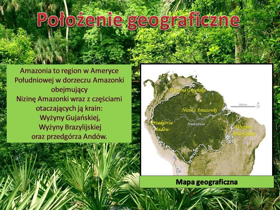Wyżyna Gujańska Wyżyna Brazylijska Przedgórze Andów Nizina Amazonki