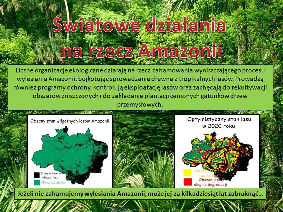 Liczne organizacje ekologiczne działają na rzecz zahamowania wyniszczającego procesu wylesiania Amazonii, bojkotując sprowadzanie drewna z tropikalnych lasów.