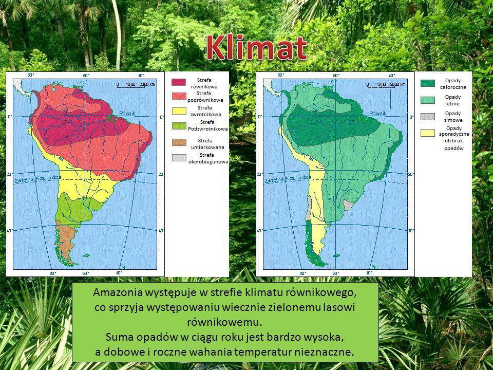 Amazonia występuje w strefie klimatu równikowego, co sprzyja występowaniu wiecznie zielonemu lasowi równikowemu. Suma opadów w ciągu roku jest bardzo