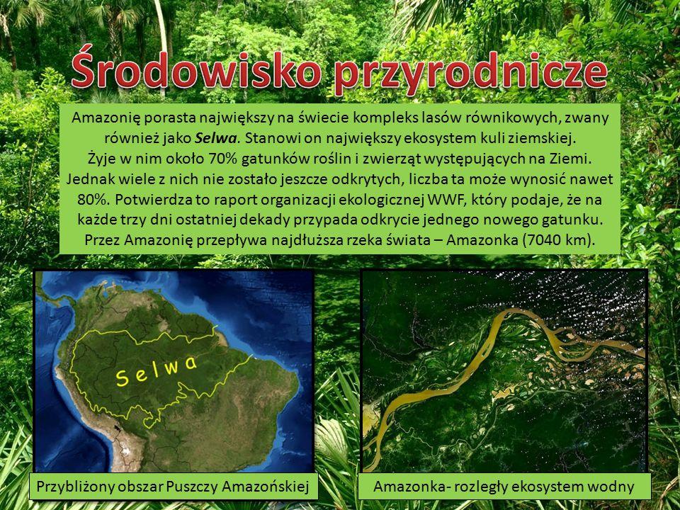 Amazonię porasta największy na świecie kompleks lasów równikowych, zwany również jako Selwa.