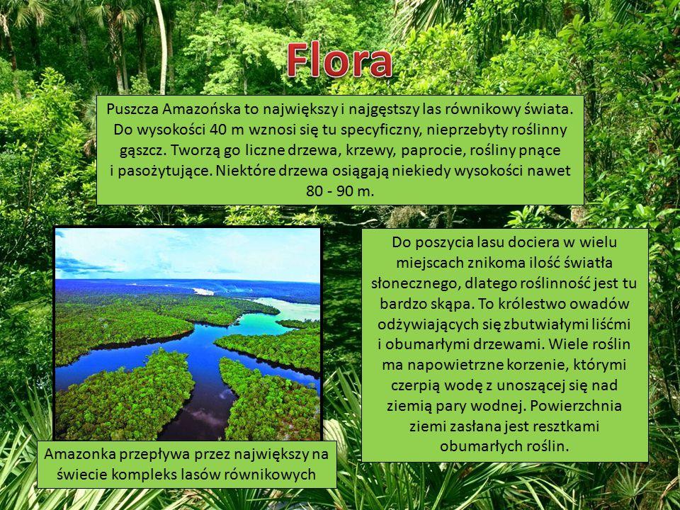 Puszcza Amazońska to największy i najgęstszy las równikowy świata. Do wysokości 40 m wznosi się tu specyficzny, nieprzebyty roślinny gąszcz. Tworzą go