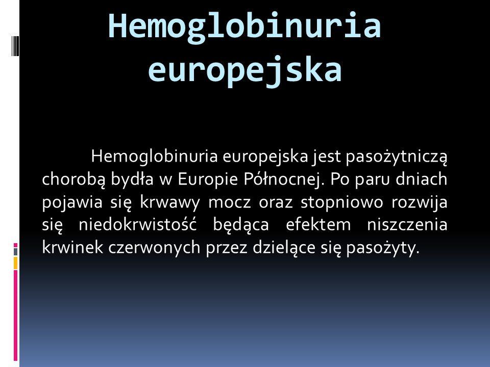 Hemoglobinuria europejska Hemoglobinuria europejska jest pasożytniczą chorobą bydła w Europie Północnej. Po paru dniach pojawia się krwawy mocz oraz s