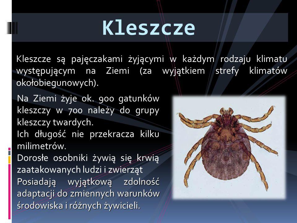 Kleszcze są pajęczakami żyjącymi w każdym rodzaju klimatu występującym na Ziemi (za wyjątkiem strefy klimatów okołobiegunowych). Kleszcze Na Ziemi żyj
