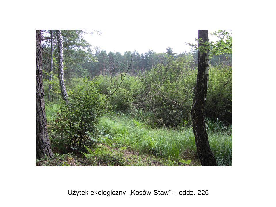 """Użytek ekologiczny """"Kosów Staw"""" – oddz. 226"""