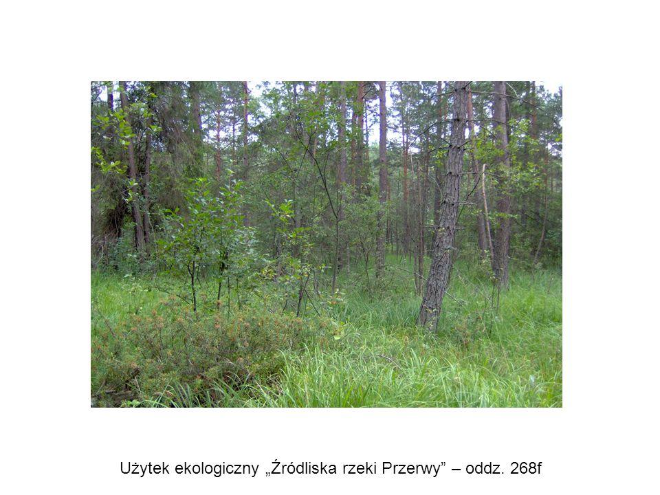 """Użytek ekologiczny """"Źródliska rzeki Przerwy"""" – oddz. 268f"""