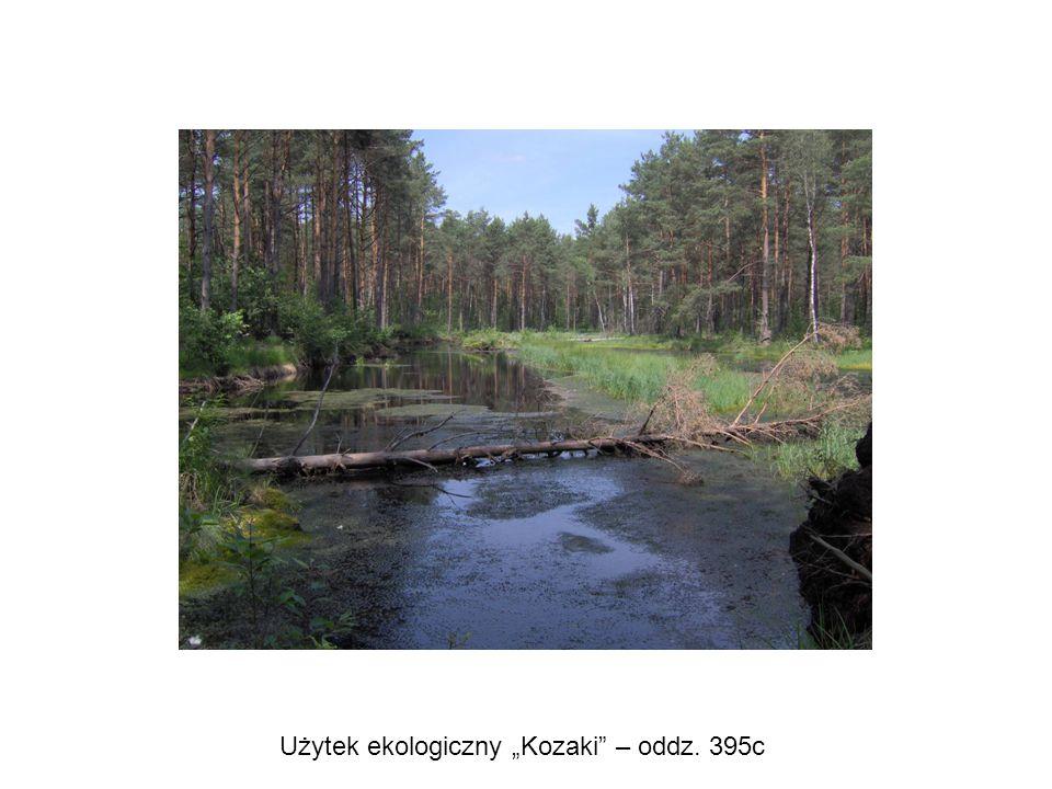 """Użytek ekologiczny """"Kozaki"""" – oddz. 395c"""