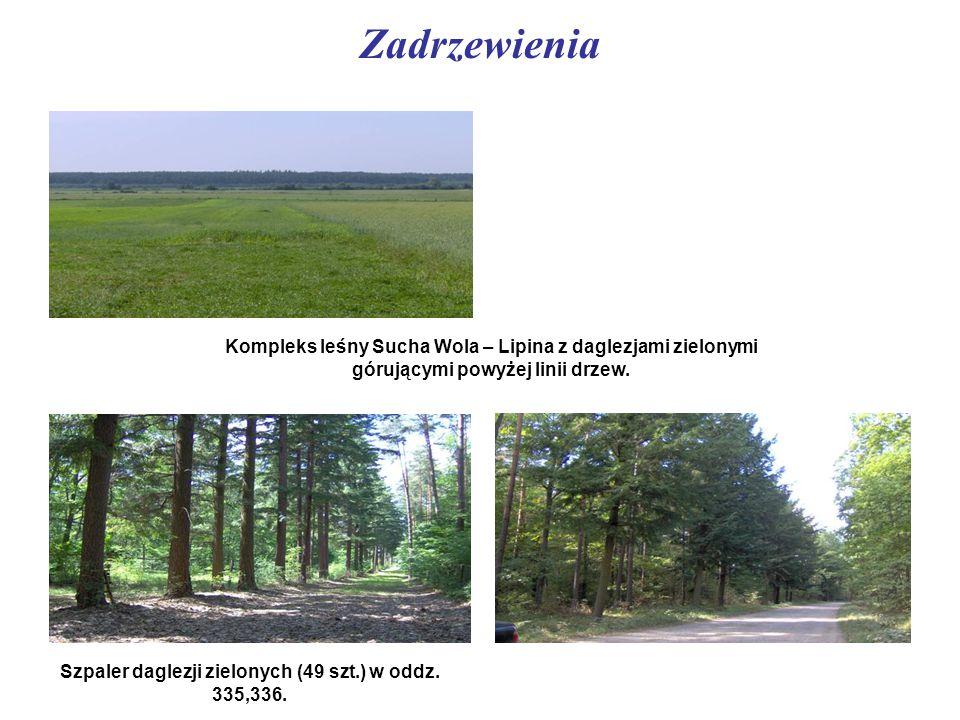 Zadrzewienia Kompleks leśny Sucha Wola – Lipina z daglezjami zielonymi górującymi powyżej linii drzew. Szpaler daglezji zielonych (49 szt.) w oddz. 33