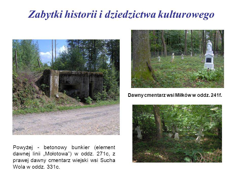 """Zabytki historii i dziedzictwa kulturowego Powyżej - betonowy bunkier (element dawnej linii """"Mołotowa"""") w oddz. 271c, z prawej dawny cmentarz wiejski"""