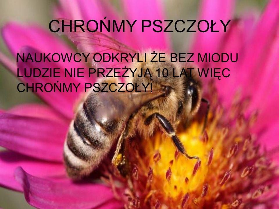 MIODEK Miód – słodki produkt spożywczy, w warunkach naturalnych wytwarzany głównie przez pszczoły właściwe (miód pszczeli) oraz nieliczne inne błonków