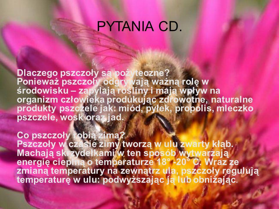 PYTANIA CD.Dlaczego pszczoły są pożyteczne.