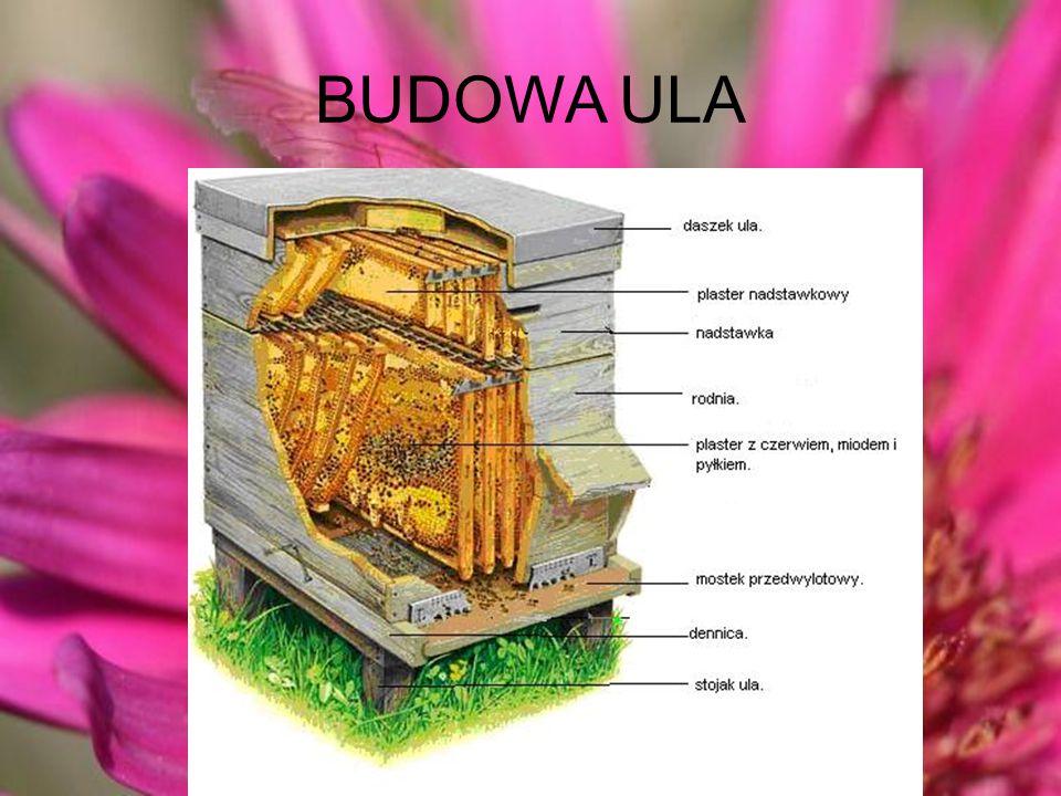 BUDOWA ULA