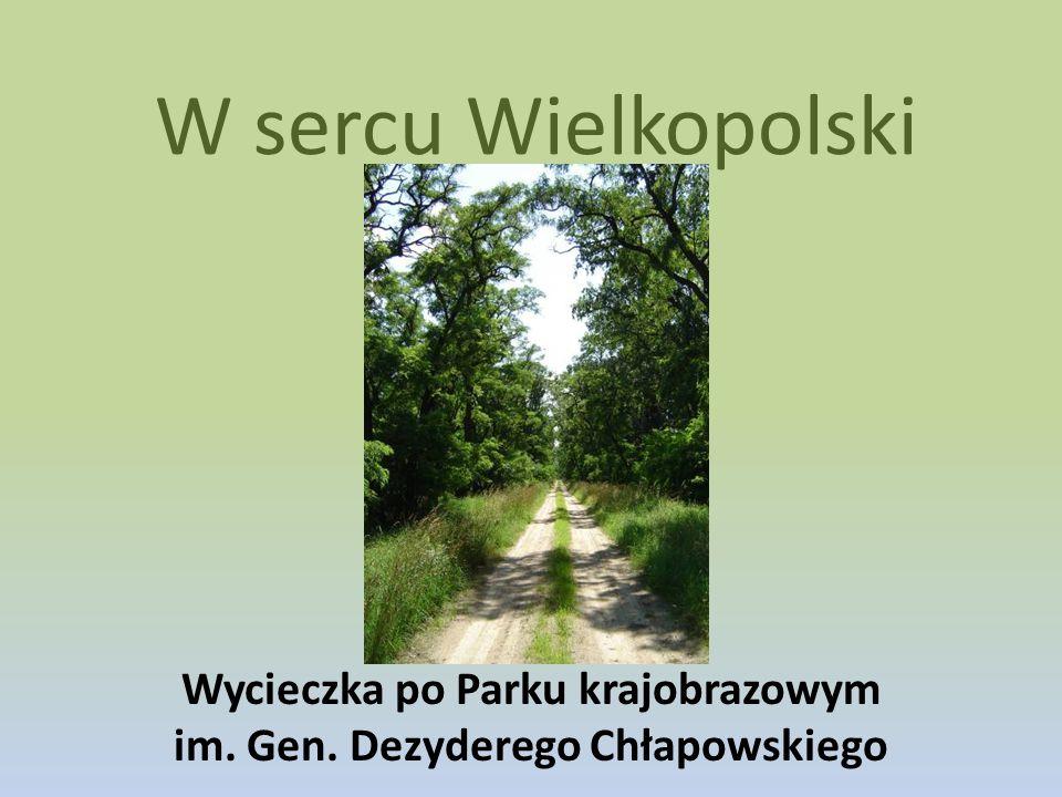 W sercu Wielkopolski Wycieczka po Parku krajobrazowym im. Gen. Dezyderego Chłapowskiego