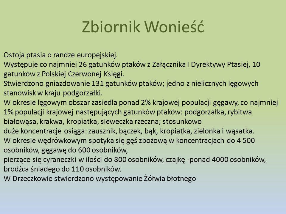 Ostoja ptasia o randze europejskiej. Występuje co najmniej 26 gatunków ptaków z Załącznika I Dyrektywy Ptasiej, 10 gatunków z Polskiej Czerwonej Księg