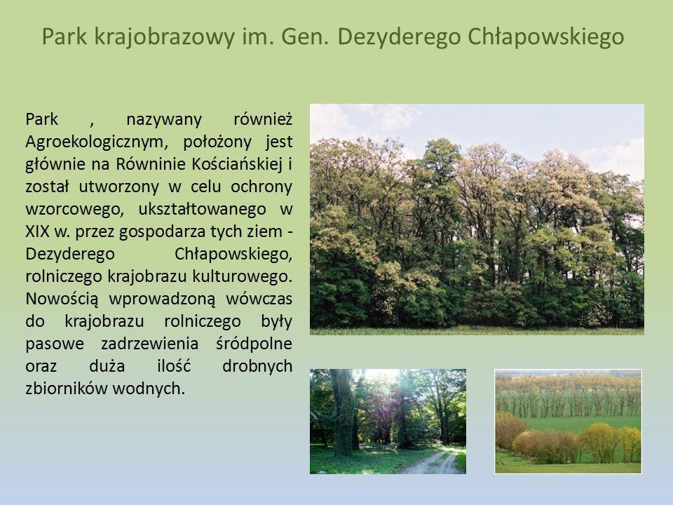 Park krajobrazowy im. Gen. Dezyderego Chłapowskiego Park, nazywany również Agroekologicznym, położony jest głównie na Równinie Kościańskiej i został u