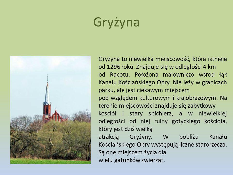 Gryżyna Gryżyna to niewielka miejscowość, która istnieje od 1296 roku. Znajduje się w odległości 4 km od Racotu. Położona malowniczo wśród łąk Kanału