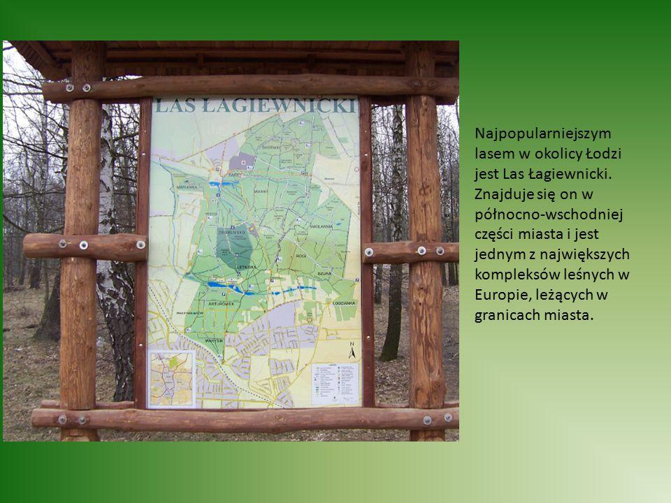 Las charakteryzuje się bardzo zróżnicowanym krajobrazem. Występują w nim wzniesienia i doliny.
