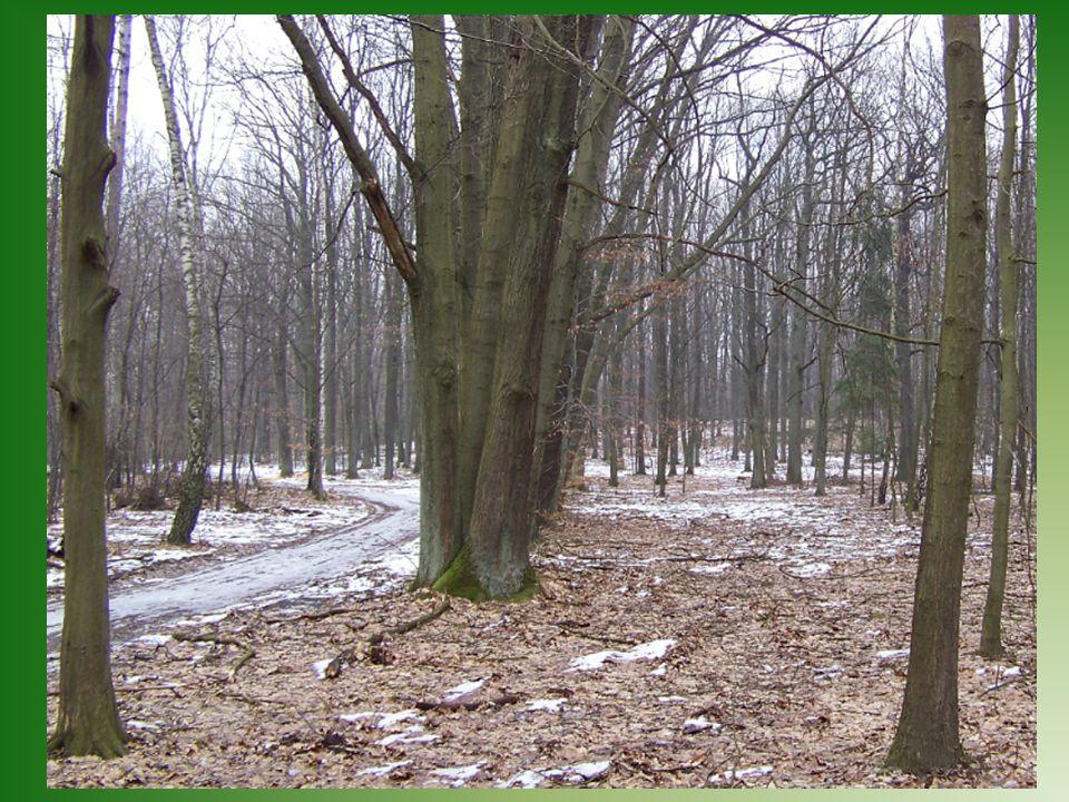 W lesie znajduje się wiele szlaków turystycznych, które oprowadzą nas po jego najpiękniejszych zakątkach.