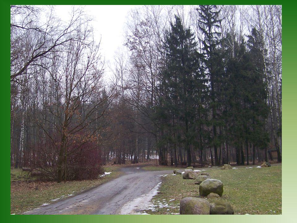 Las Łagiewnicki jest nie tylko miejscem spacerów i odpoczynku łodzian.