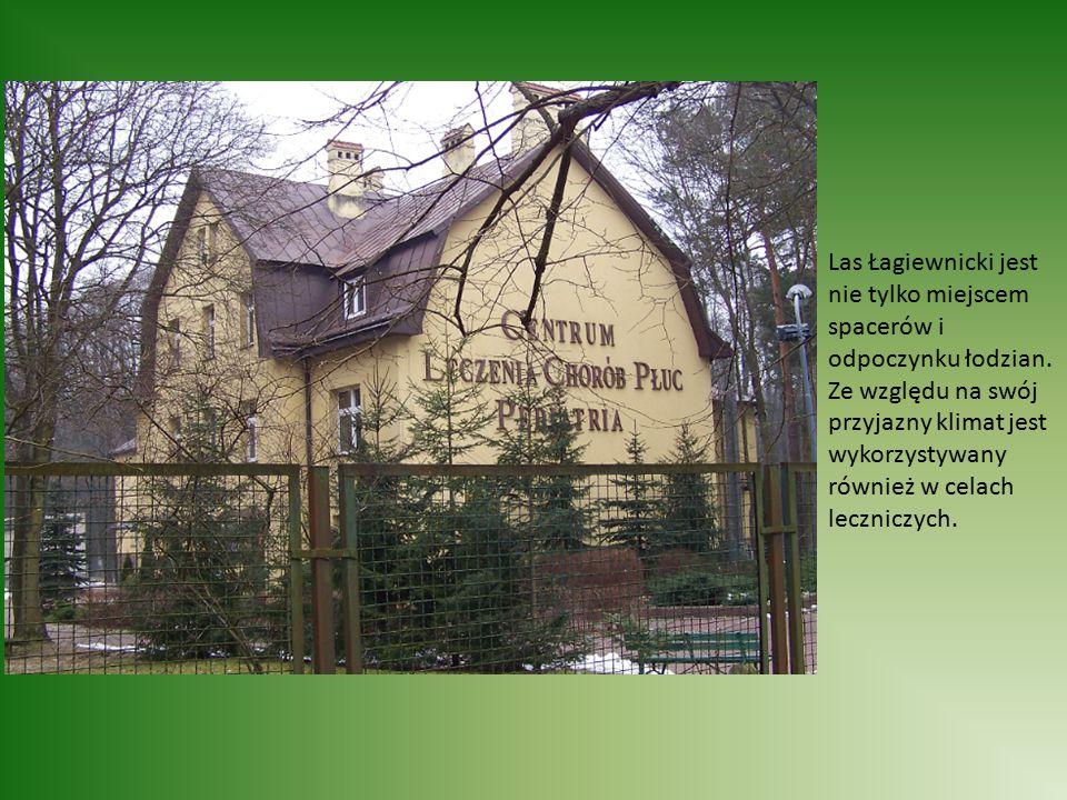Las Łagiewnicki jest nie tylko miejscem spacerów i odpoczynku łodzian. Ze względu na swój przyjazny klimat jest wykorzystywany również w celach leczni