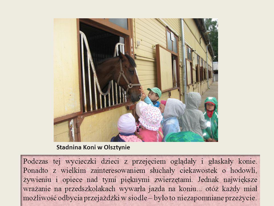 Stadnina Koni w Olsztynie Podczas tej wycieczki dzieci z przejęciem oglądały i głaskały konie. Ponadto z wielkim zainteresowaniem słuchały ciekawostek