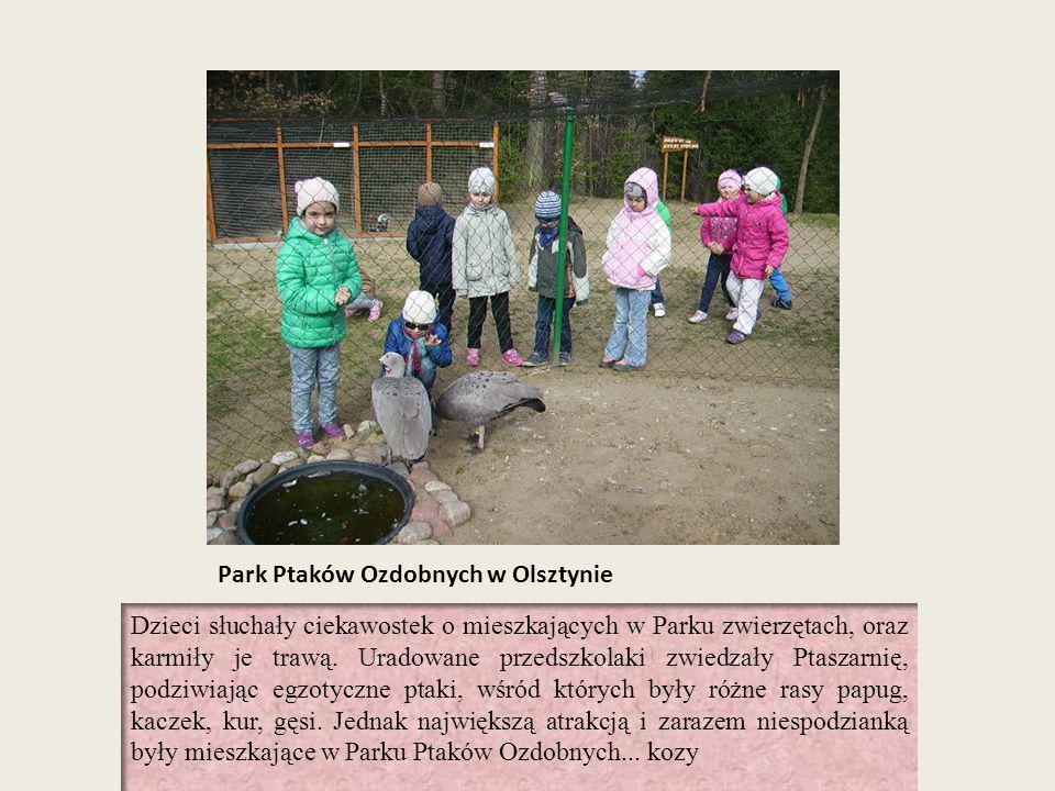 Park Ptaków Ozdobnych w Olsztynie Dzieci słuchały ciekawostek o mieszkających w Parku zwierzętach, oraz karmiły je trawą. Uradowane przedszkolaki zwie