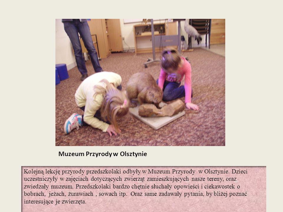 Muzeum Przyrody w Olsztynie Kolejną lekcję przyrody przedszkolaki odbyły w Muzeum Przyrody w Olsztynie. Dzieci uczestniczyły w zajęciach dotyczących z