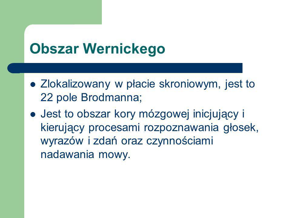 Obszar Wernickego Zlokalizowany w płacie skroniowym, jest to 22 pole Brodmanna; Jest to obszar kory mózgowej inicjujący i kierujący procesami rozpozna