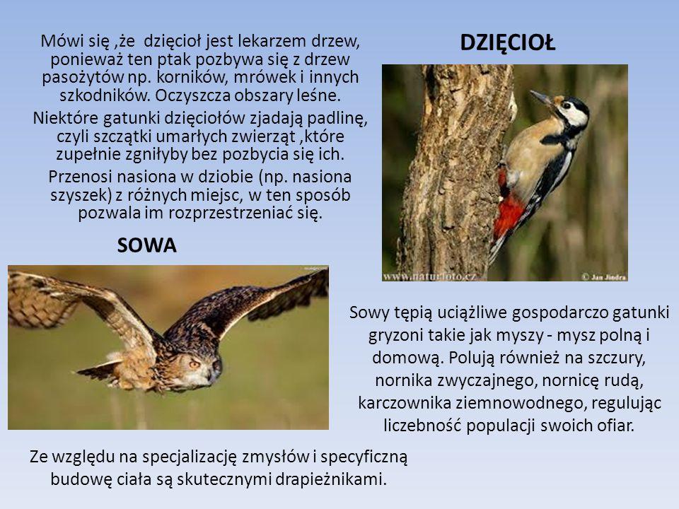 W lesie jest mnóstwo PTAKÓW .Tutaj zakładają swoje gniazda, zdobywają pokarm i ukrywają się.