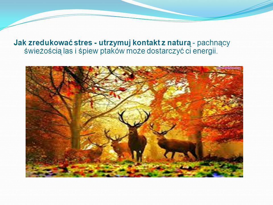 Jak zredukować stres - utrzymuj kontakt z naturą - pachnący świeżością las i śpiew ptaków może dostarczyć ci energii.