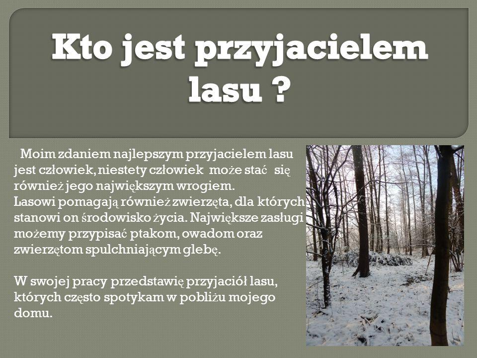 Moim zdaniem najlepszym przyjacielem lasu jest cz ł owiek, niestety cz ł owiek mo ż e sta ć si ę równie ż jego najwi ę kszym wrogiem. Lasowi pomagaj ą