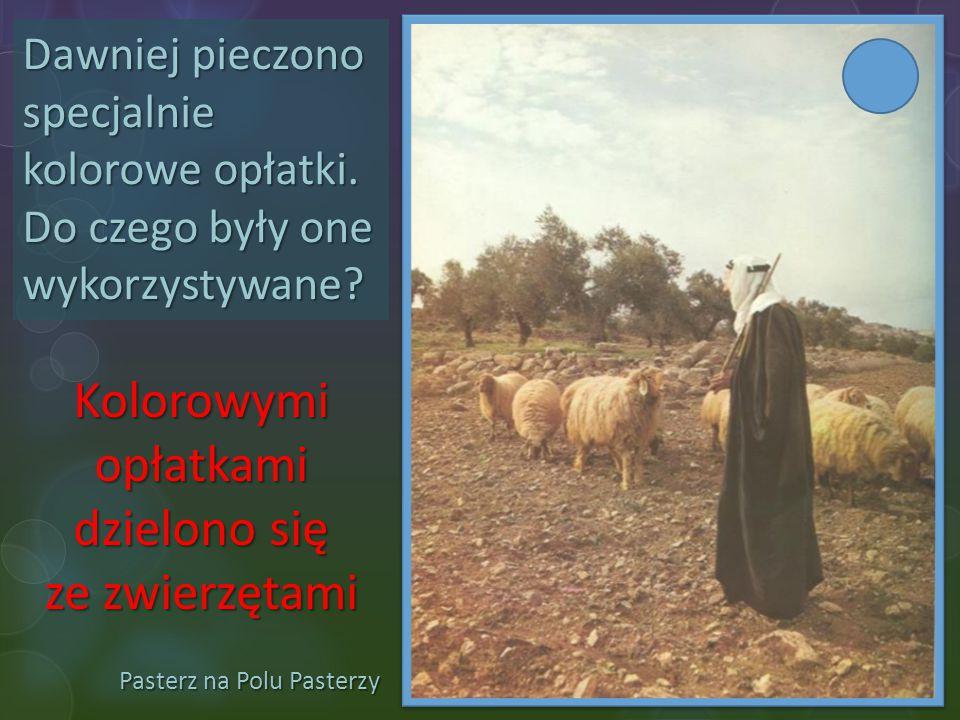 Pasterz na Polu Pasterzy Dawniej pieczono specjalnie kolorowe opłatki. Do czego były one wykorzystywane? Kolorowymi opłatkami dzielono się ze zwierzęt