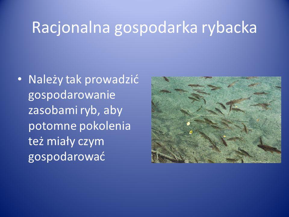 Racjonalna gospodarka rybacka Należy tak prowadzić gospodarowanie zasobami ryb, aby potomne pokolenia też miały czym gospodarować
