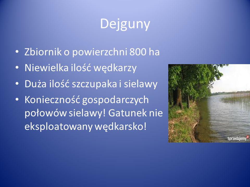 Dejguny Zbiornik o powierzchni 800 ha Niewielka ilość wędkarzy Duża ilość szczupaka i sielawy Konieczność gospodarczych połowów sielawy! Gatunek nie e