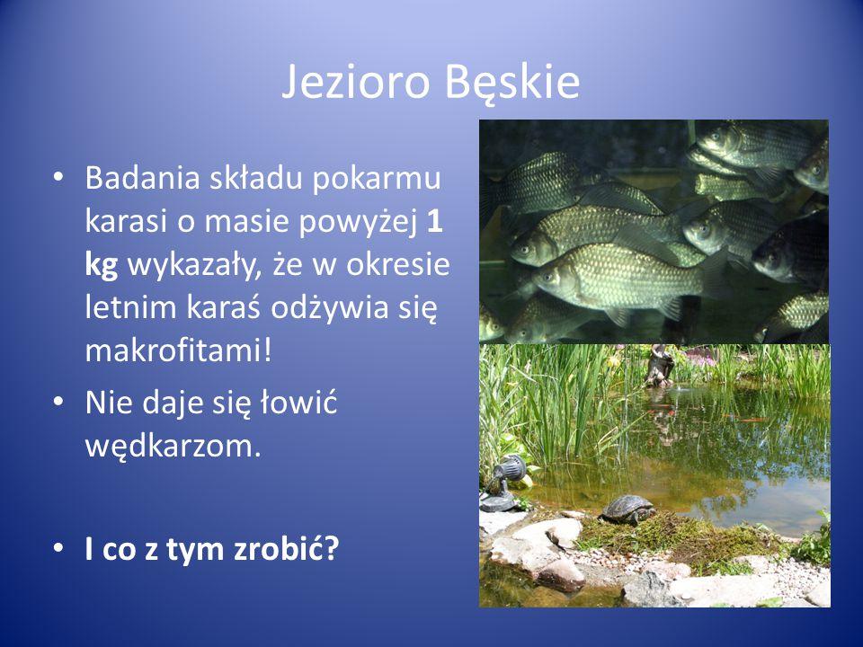 Jezioro Bęskie Badania składu pokarmu karasi o masie powyżej 1 kg wykazały, że w okresie letnim karaś odżywia się makrofitami! Nie daje się łowić wędk