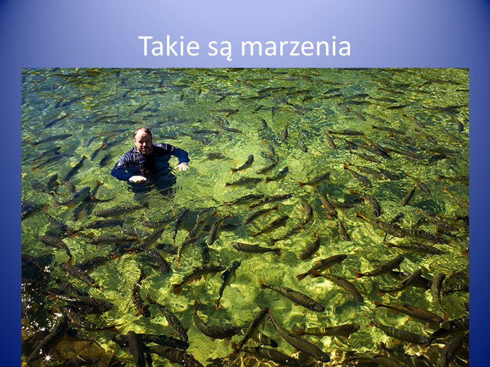 Powierzchnia 120 ha Bardzo zasobne w ryby Główne gatunki: sandacz, leszcz, karaś srebrzysty Duża aktywność kłusownicza W 2014 wykupiono 6 licencji rocznych.
