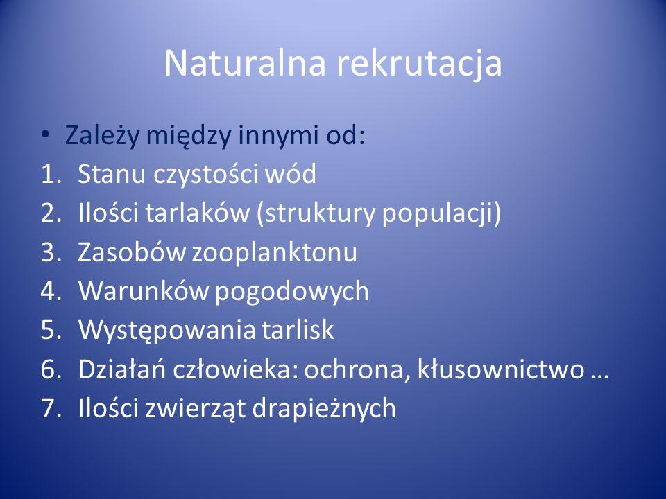 Naturalna rekrutacja Zależy między innymi od: 1.Stanu czystości wód 2.Ilości tarlaków (struktury populacji) 3.Zasobów zooplanktonu 4.Warunków pogodowy