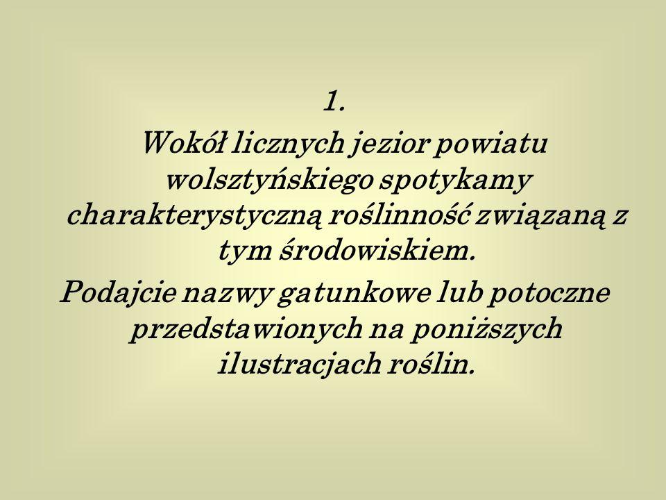 1. Wokół licznych jezior powiatu wolsztyńskiego spotykamy charakterystyczną roślinność związaną z tym środowiskiem. Podajcie nazwy gatunkowe lub potoc