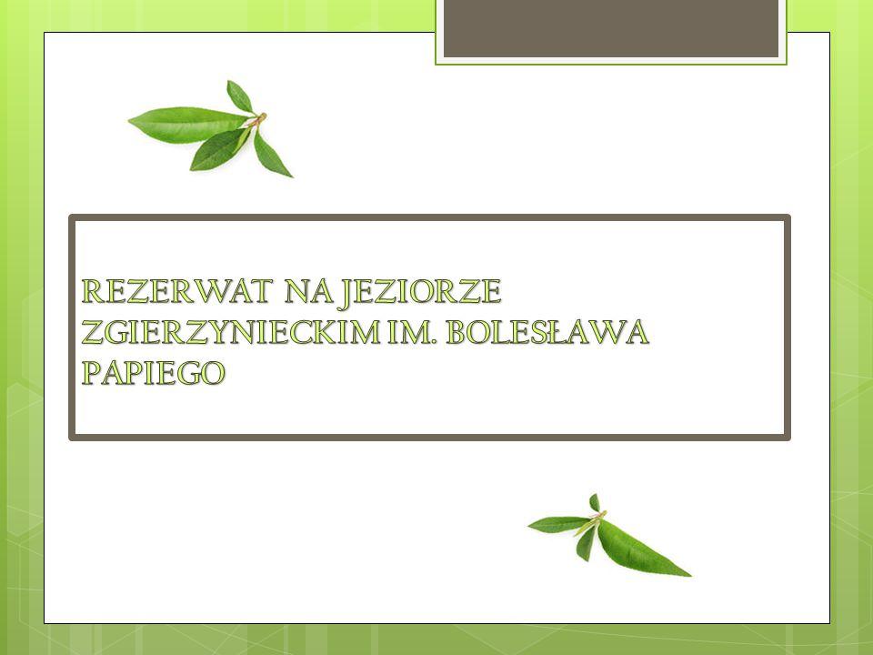 REZERWAT NA JEZIORZE ZGIERZYNIECKIM IM.BOLESŁAWA PAPIEGO  Rezerwat ptasi (pow.