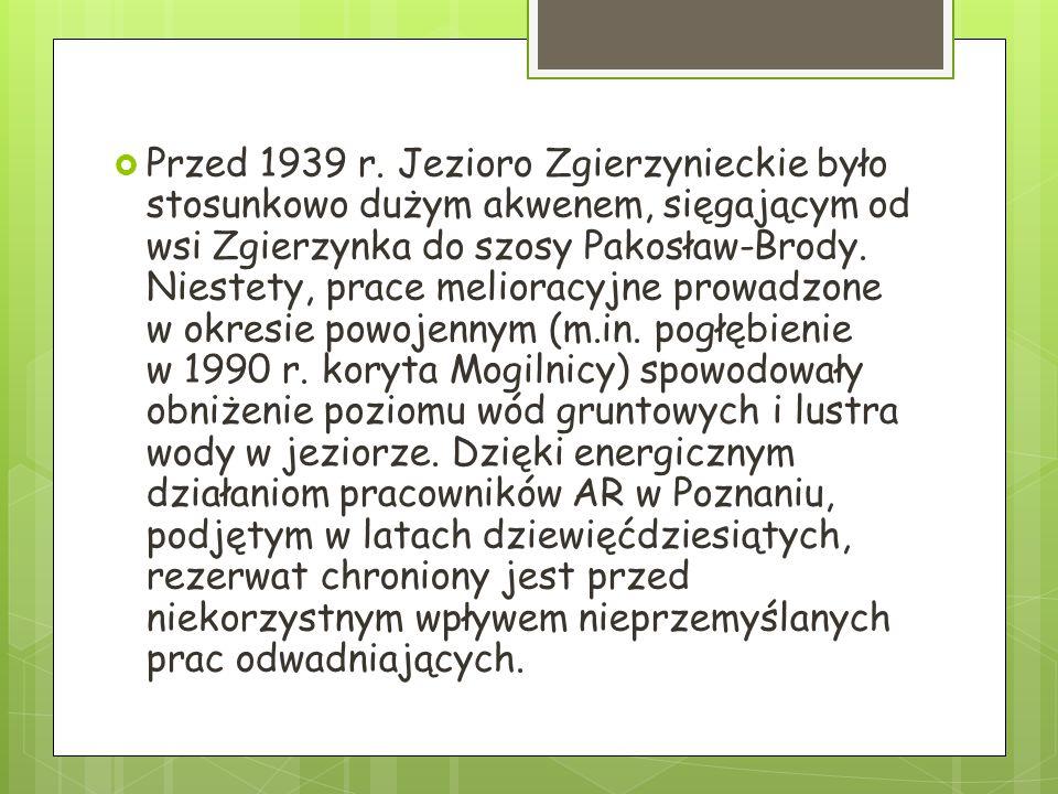  Przed 1939 r. Jezioro Zgierzynieckie było stosunkowo dużym akwenem, sięgającym od wsi Zgierzynka do szosy Pakosław-Brody. Niestety, prace melioracyj